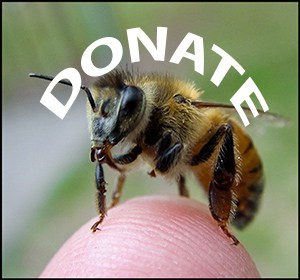Bee Supportive - Donate!