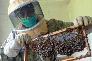 beekeeper Hermes Conde