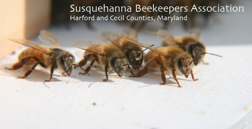 Susquehanna Beekeepers Association offering Intro to Beekeeping Class
