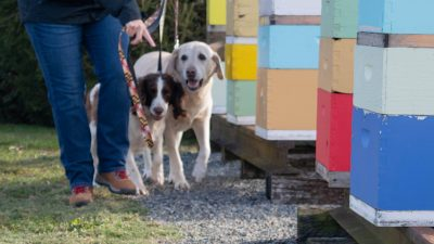 Cybil Preston works with AFB dogs