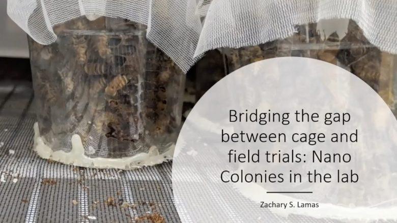 Zac Lamas on Nano Colonies